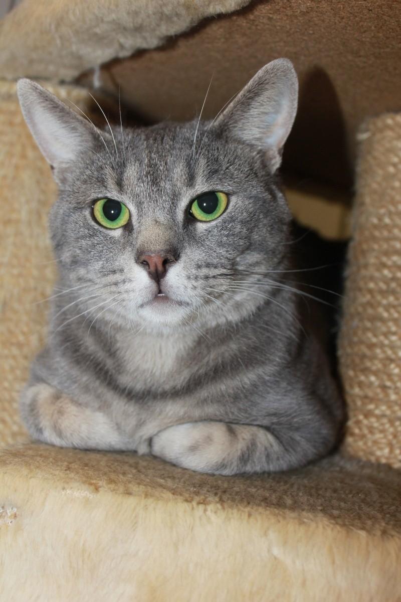 37 chats attendent toujours leur famille au refuge! ( euh non 7) Happy10