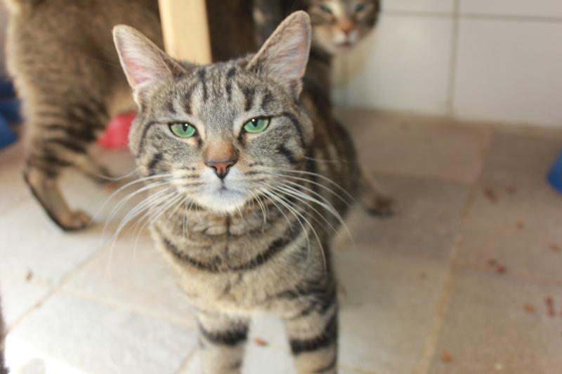 37 chats attendent toujours leur famille au refuge! ( euh non 7) Luna10
