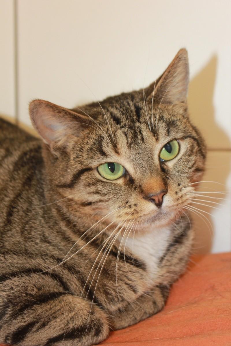 37 chats attendent toujours leur famille au refuge! ( euh non 7) Maki10