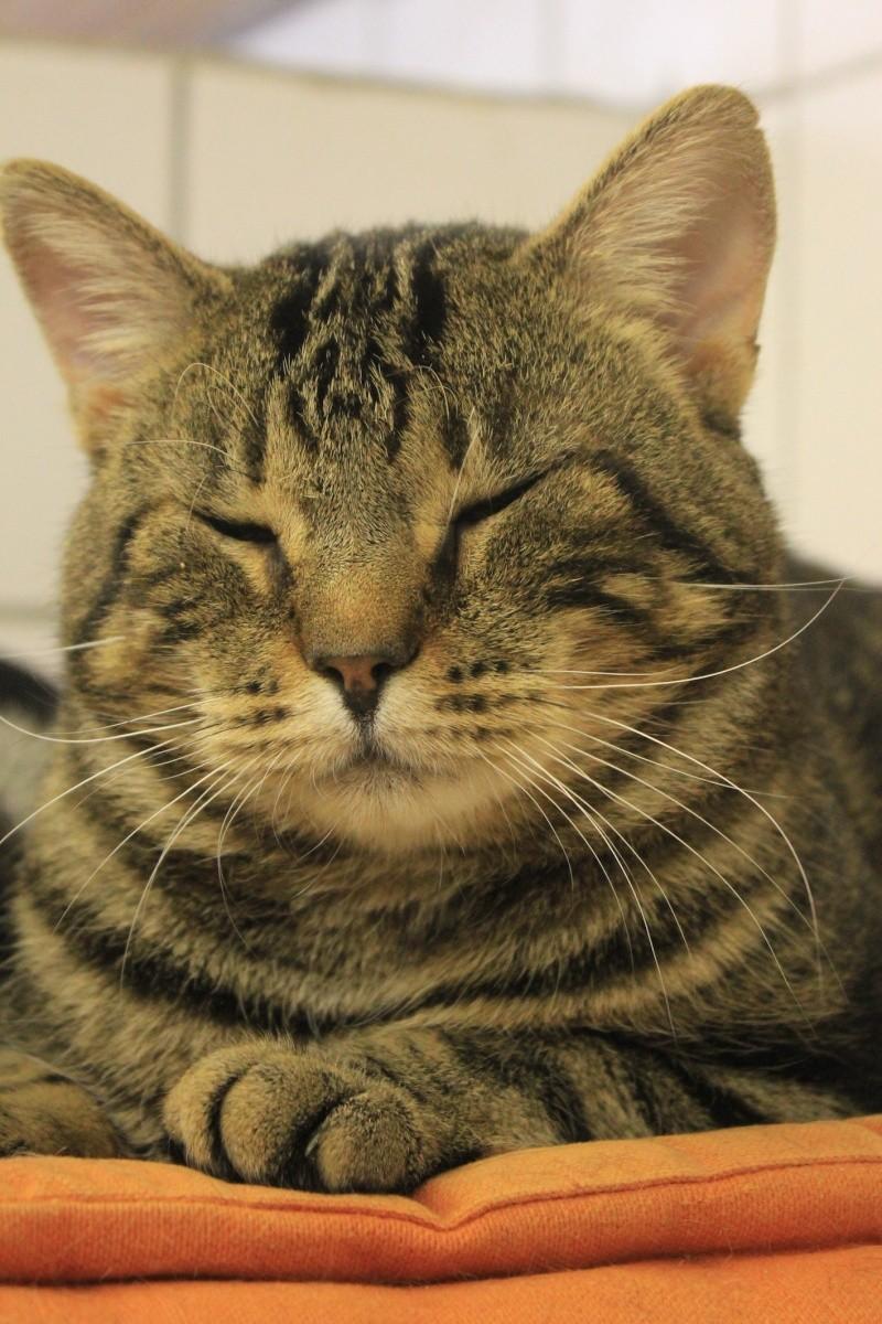 37 chats attendent toujours leur famille au refuge! ( euh non 7) Mika10