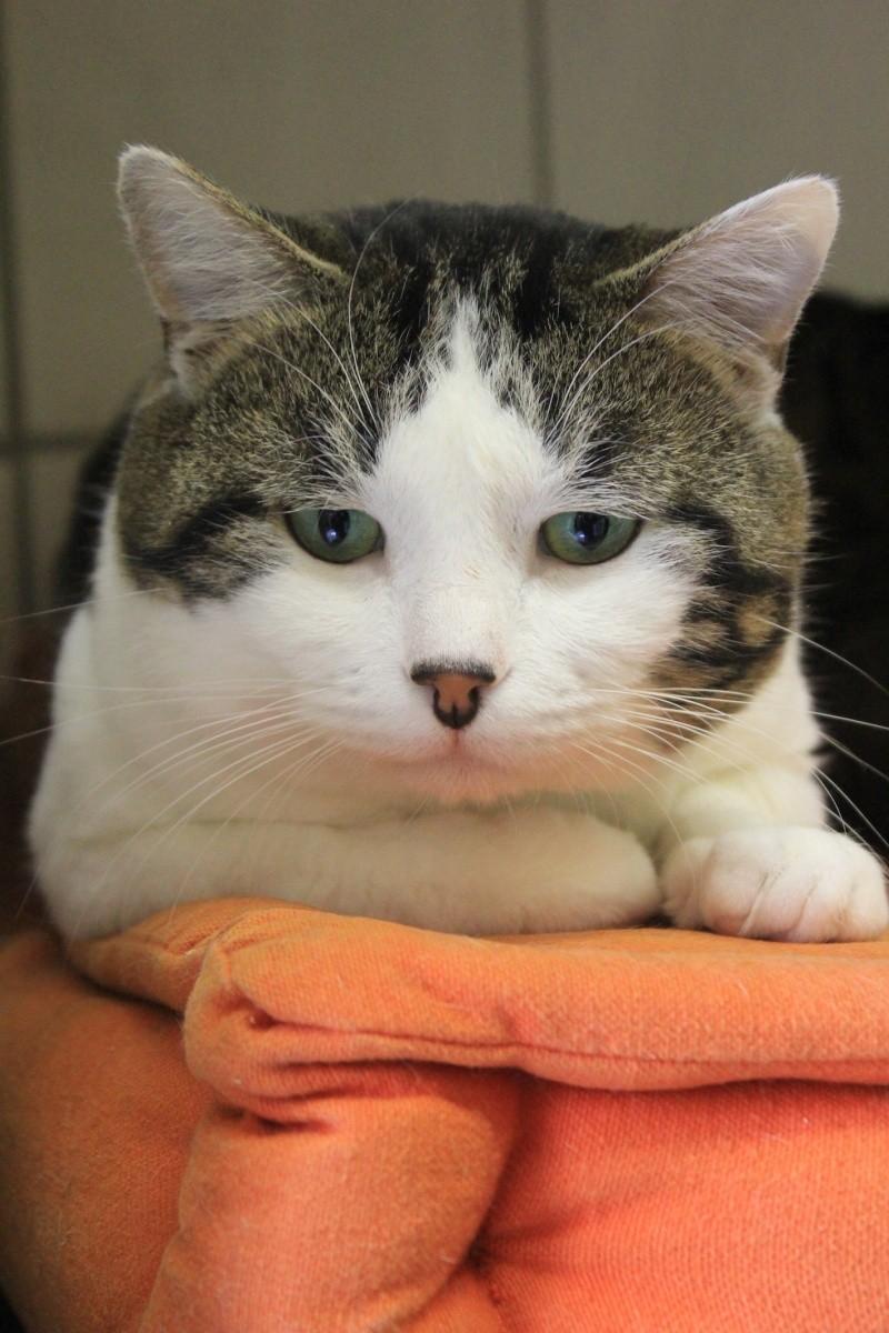 37 chats attendent toujours leur famille au refuge! ( euh non 7) Milky210