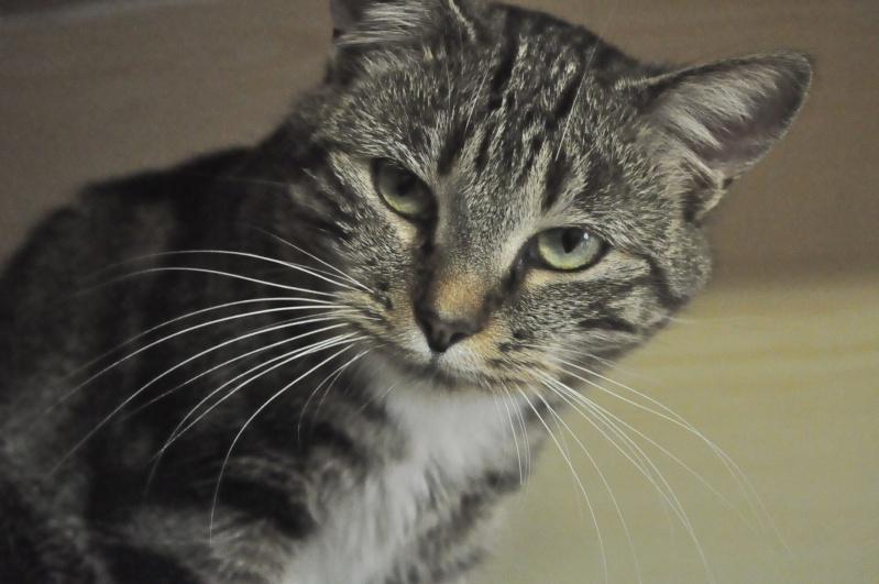37 chats attendent toujours leur famille au refuge! ( euh non 7) Mistig10
