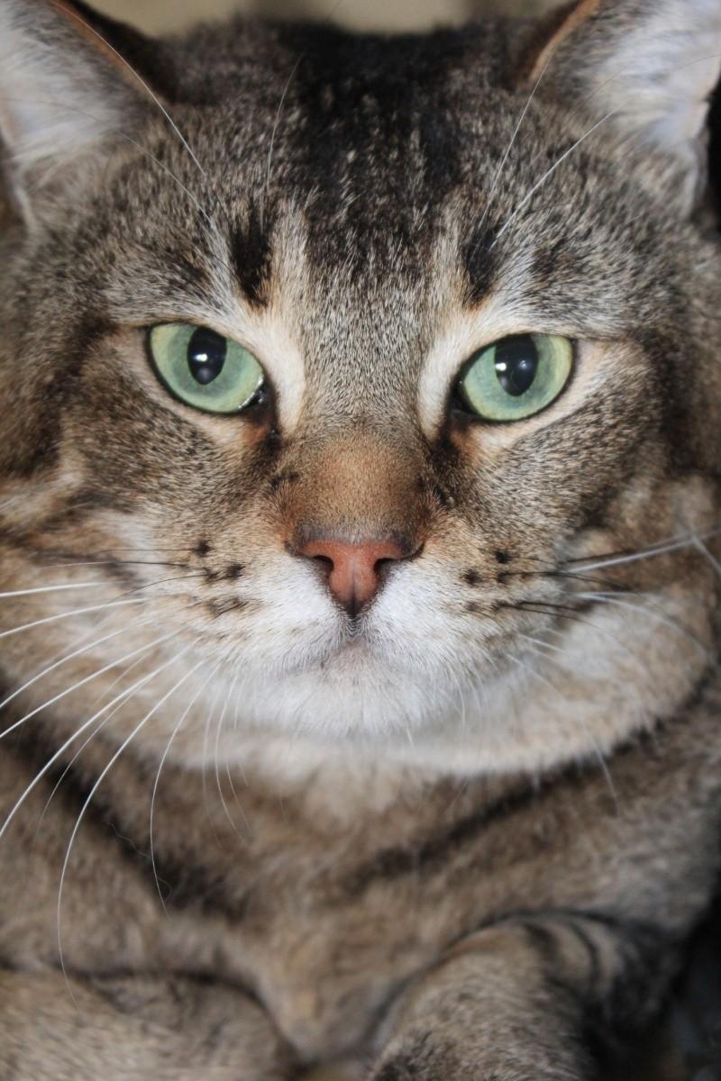 37 chats attendent toujours leur famille au refuge! ( euh non 7) Noa210