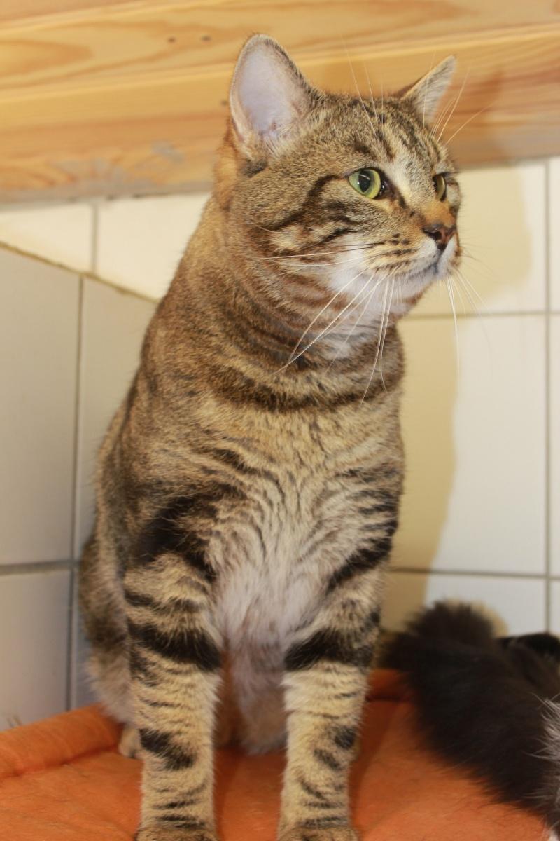 37 chats attendent toujours leur famille au refuge! ( euh non 7) Omega10