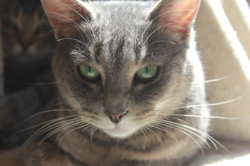 37 chats attendent toujours leur famille au refuge! ( euh non 7) Penny11
