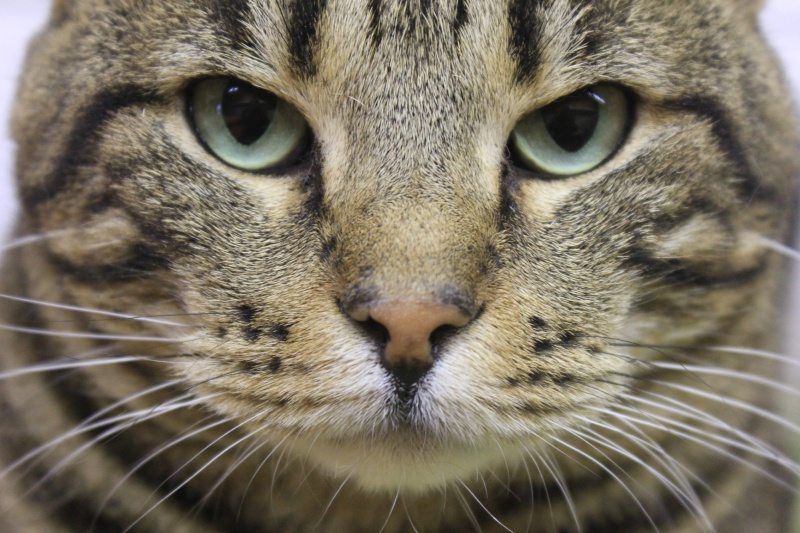 37 chats attendent toujours leur famille au refuge! ( euh non 7) Pepsi10