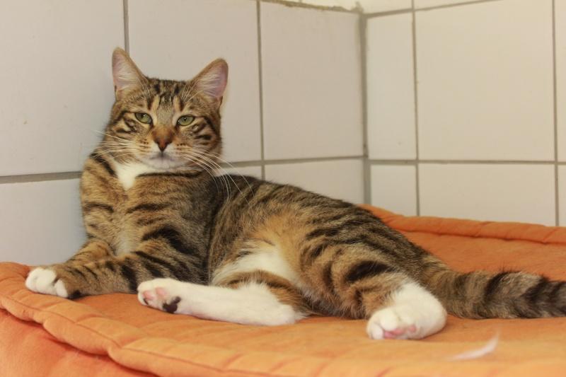 37 chats attendent toujours leur famille au refuge! ( euh non 7) Rangir10