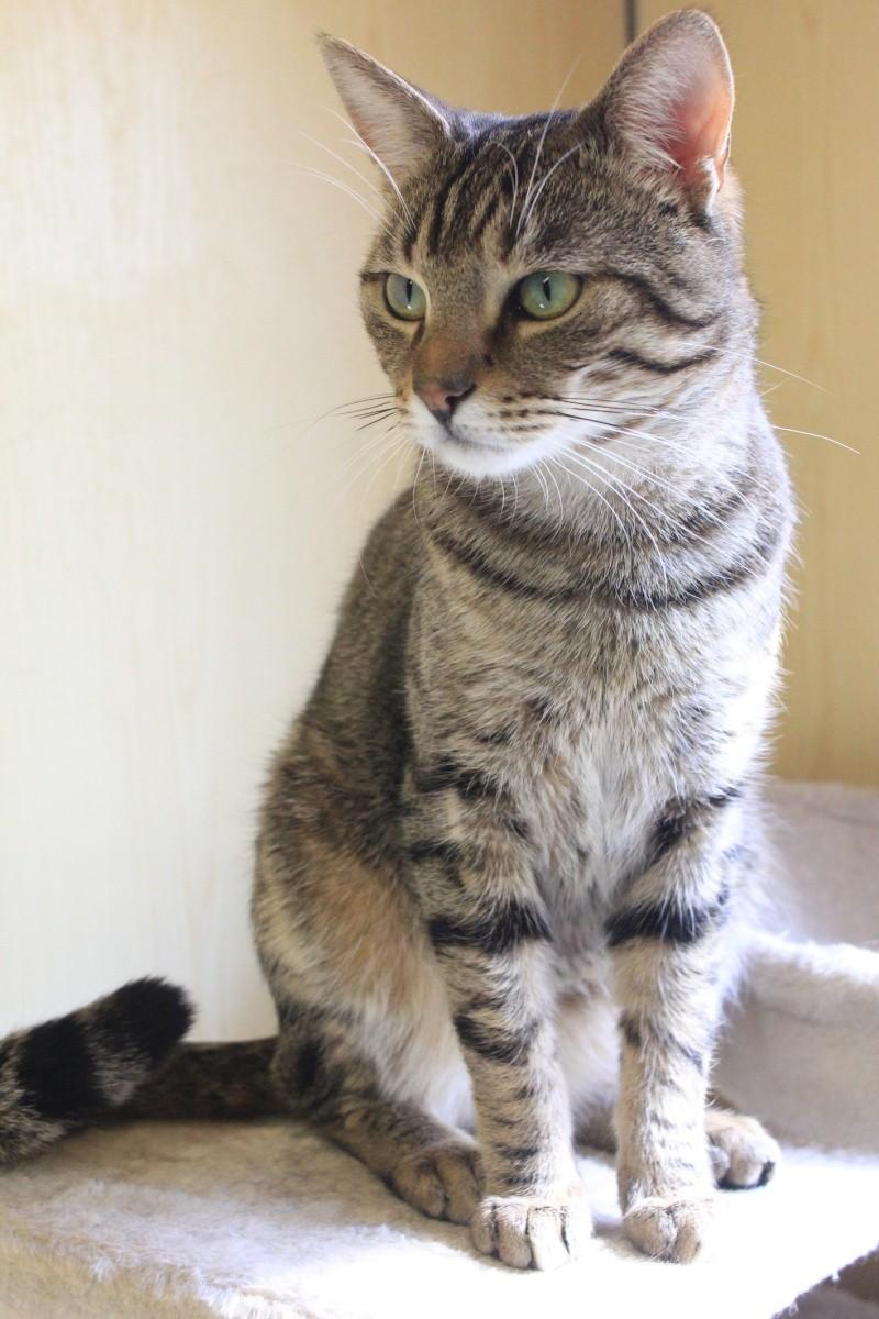 37 chats attendent toujours leur famille au refuge! ( euh non 7) Salsa11