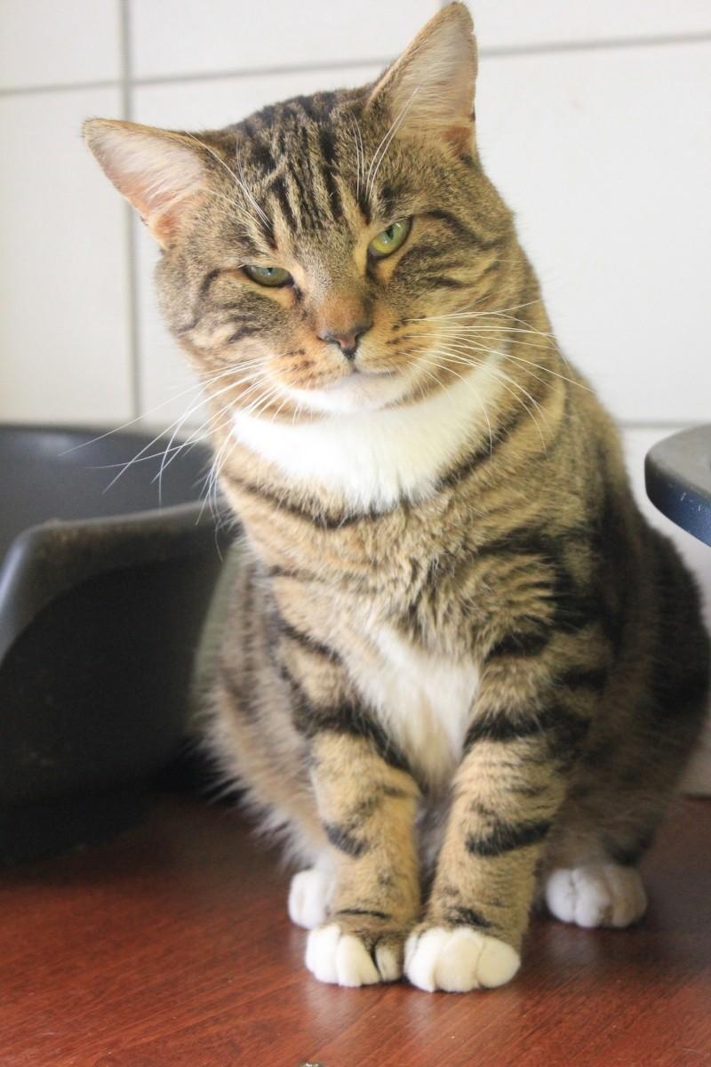 37 chats attendent toujours leur famille au refuge! ( euh non 7) Shun210