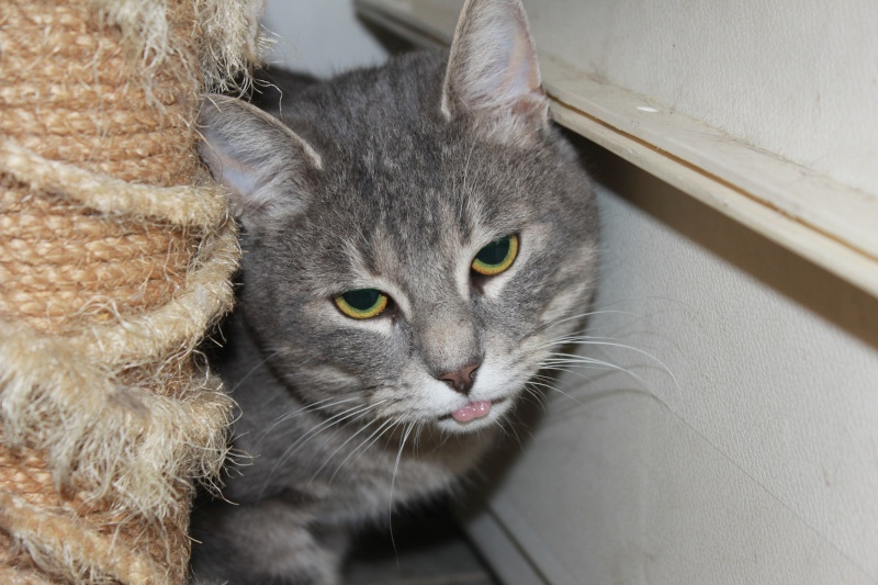 37 chats attendent toujours leur famille au refuge! ( euh non 7) Tim10