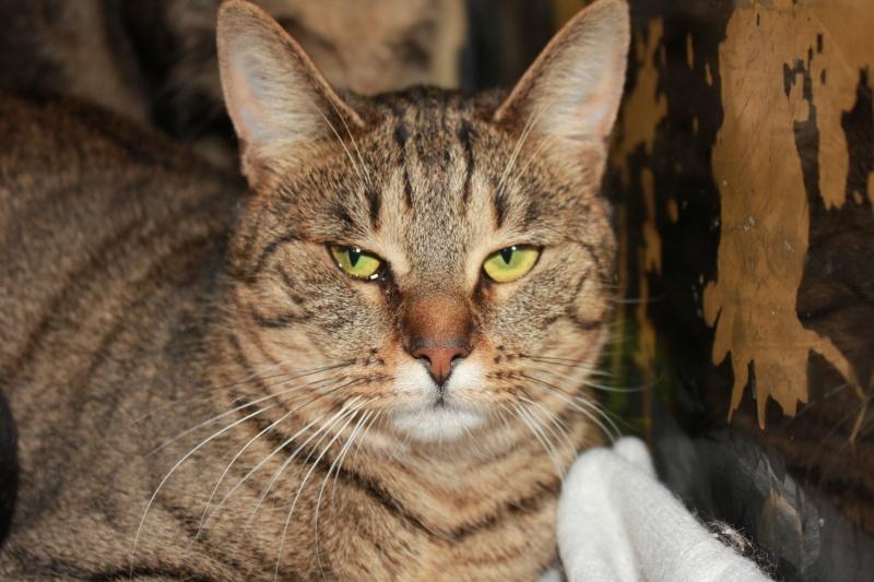 37 chats attendent toujours leur famille au refuge! ( euh non 7) Vahine10