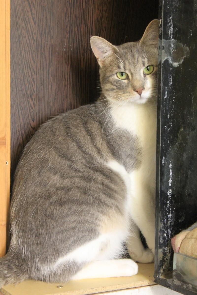 37 chats attendent toujours leur famille au refuge! ( euh non 7) Yuna10