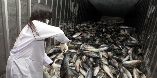 Tsunami au Japon mars 2011 14999510