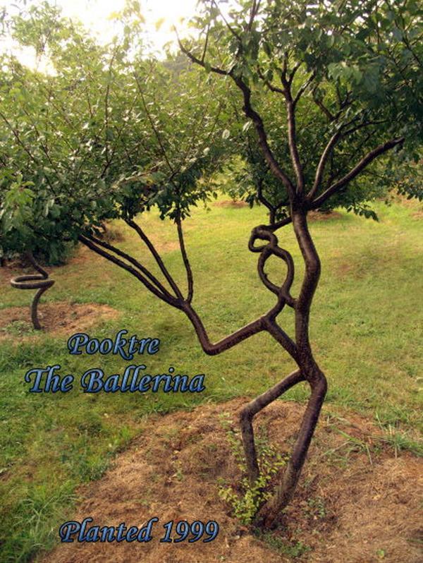 Incroyable ces arbres diriges par un homme !!!!!!!!!!!!!!!!!!!!!!!!! l'effet est étonnant!!!!!!!!!!!!!!!!!! Arbres10