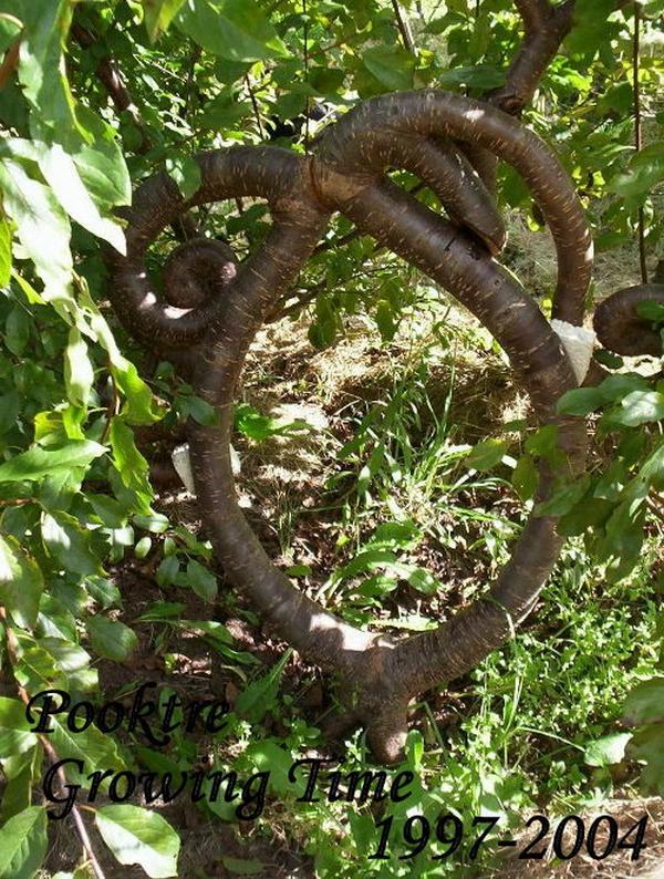 Incroyable ces arbres diriges par un homme !!!!!!!!!!!!!!!!!!!!!!!!! l'effet est étonnant!!!!!!!!!!!!!!!!!! Arbres17