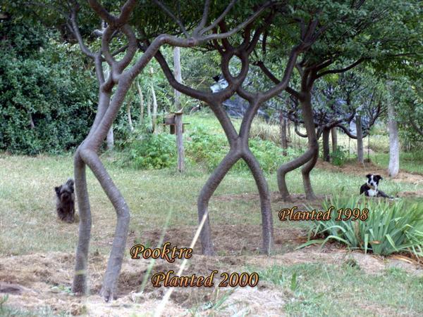Incroyable ces arbres diriges par un homme !!!!!!!!!!!!!!!!!!!!!!!!! l'effet est étonnant!!!!!!!!!!!!!!!!!! Arbres18