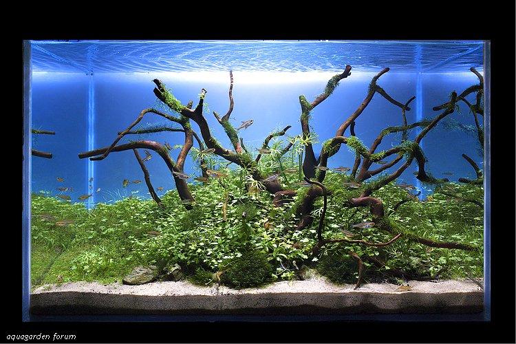 Fond Pour Aquarium