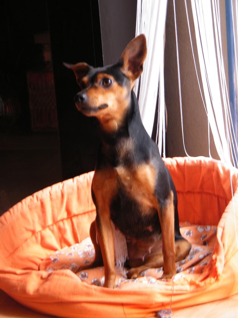 *** spécial *** photos de nos animaux *** - Page 4 Dscf3610