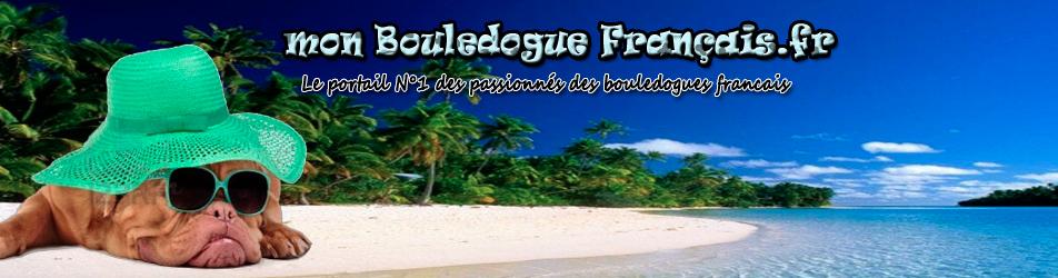 mon Bouledogue Français