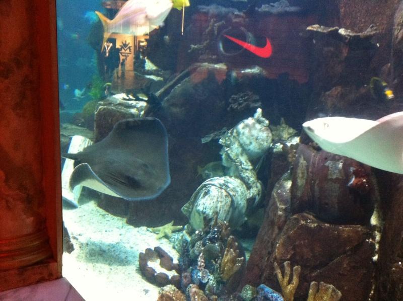 Aquarium de l'hôtel/casino Caesars Palace - Las Vegas Img_0110