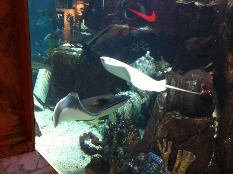 Aquarium de l'hôtel/casino Caesars Palace - Las Vegas Img_0111