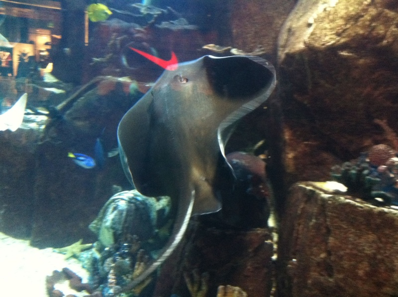 Aquarium de l'hôtel/casino Caesars Palace - Las Vegas Img_0112