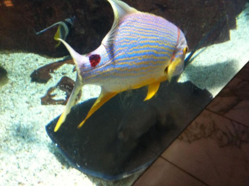 Aquarium de l'hôtel/casino Caesars Palace - Las Vegas Img_0113