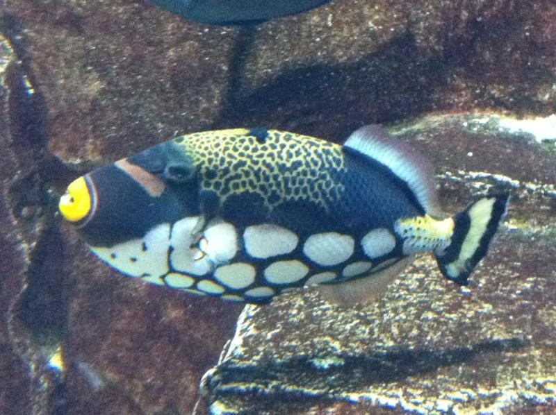Aquarium de l'hôtel/casino Caesars Palace - Las Vegas Img_0114