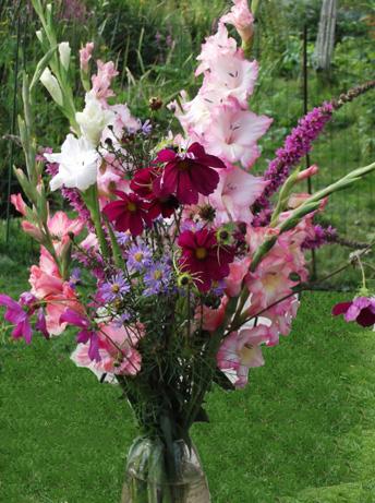 Photo nature (et autres phénomènes.) Fleurs10