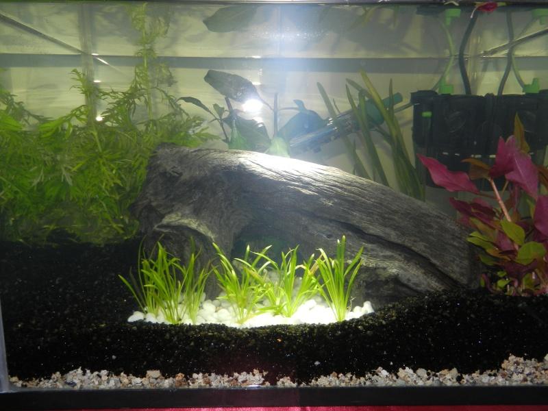 Installation de mon premier aquarium 24_09_10