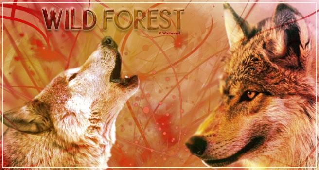 Wild Forest: Les éléments