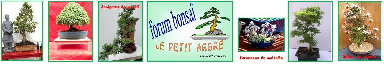 FRANCE BONSAI n°94 Bandea36