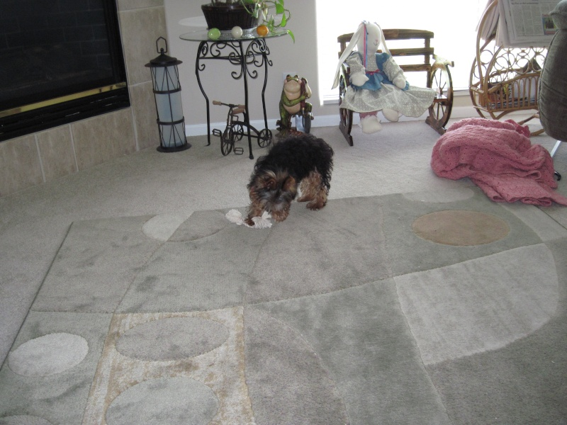 new puppy Img_0111