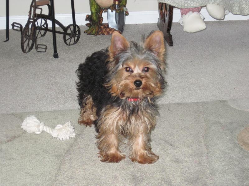 new puppy Img_0112