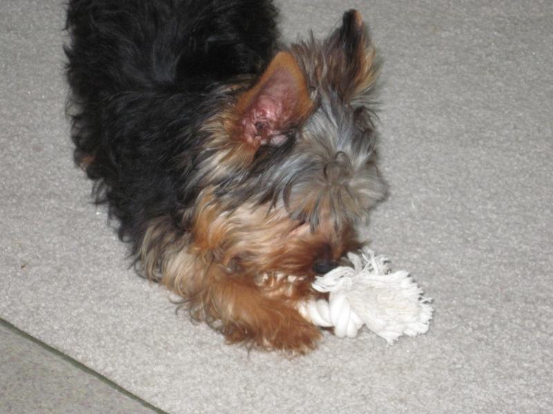 new puppy Img_0113