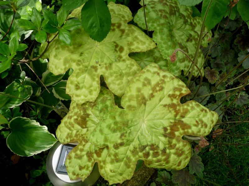 Quelques plantes d'ombre ou mi-ombre 02-05-17
