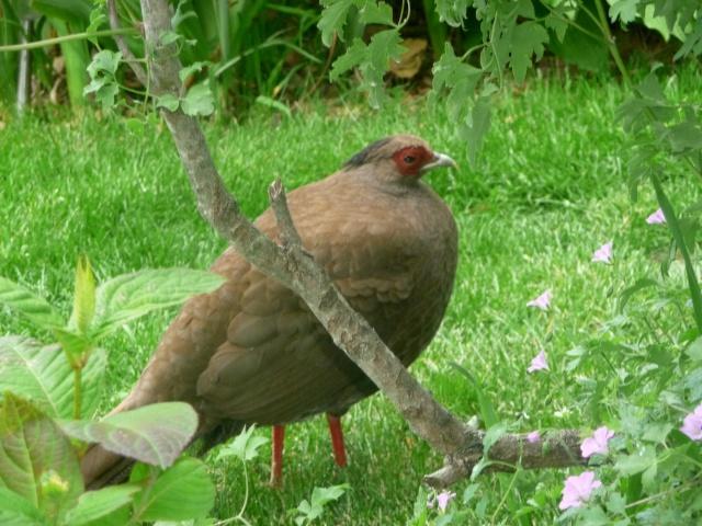 Oiseaux de printemps 17-05-16