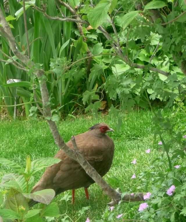 Oiseaux de printemps 17-05-17