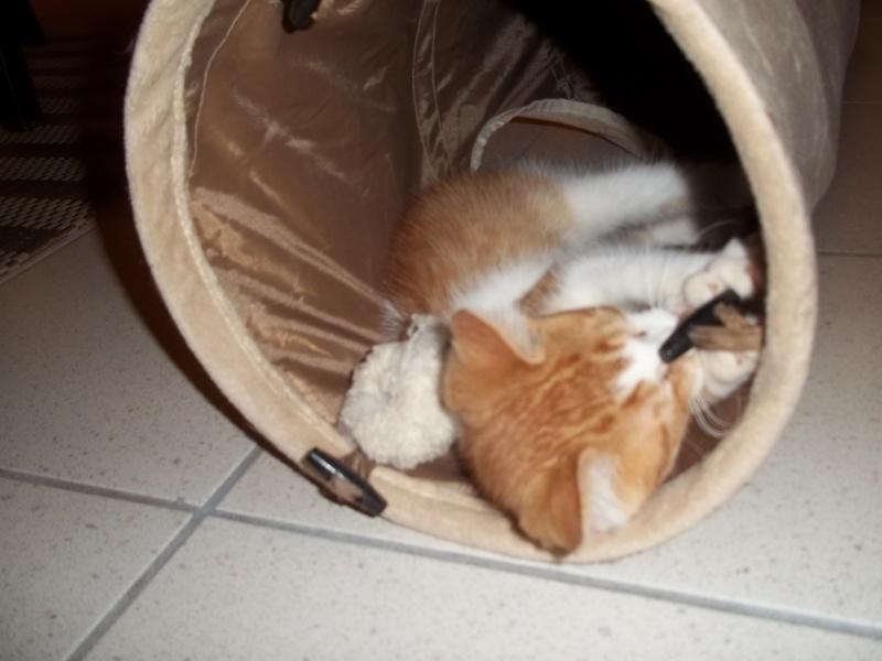 Gazou, chaton mâle roux et blanc , né vers le 20/11/2011 100_2038