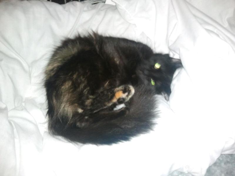 Fantaisie, femelle noire et feu née en décembre 2010 Fantai10