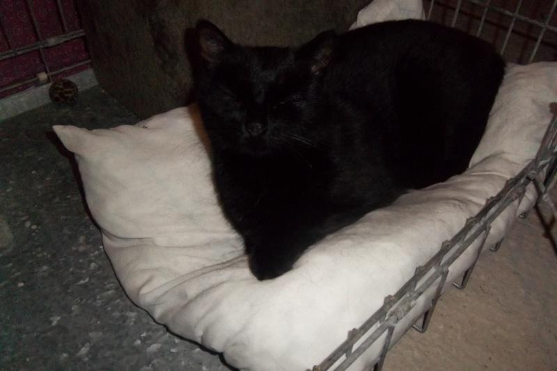 Deslys, chatte noire, née en 2008 Imgp1111