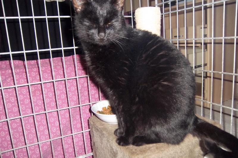 Deslys, chatte noire, née en 2008 Imgp1112