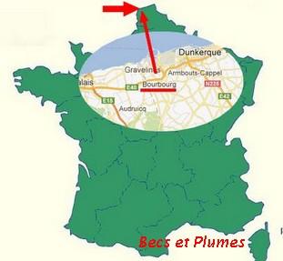 la poule Bourbourg France10