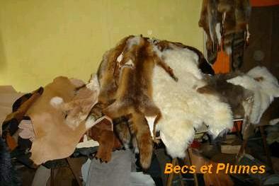 Le Lapin Domestique Picfou10