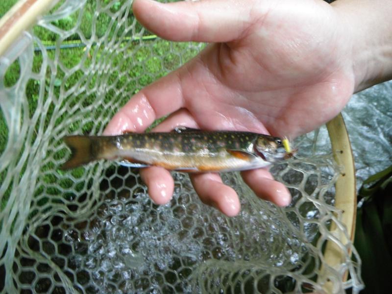 Great Day on a Brookie Stream! Dscf7126