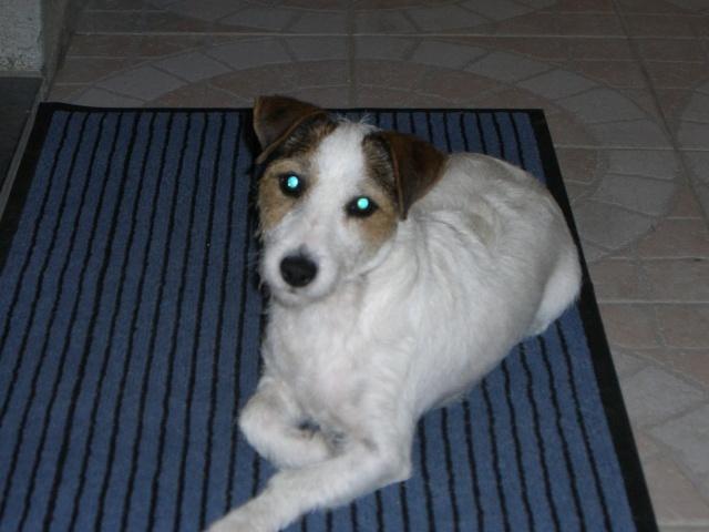 Ma petite Youki 2006_d11