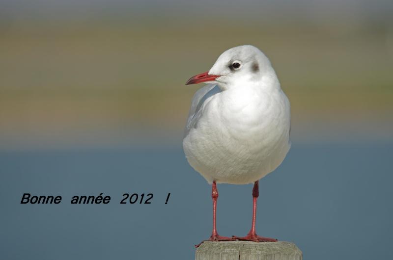 BONNE ANNEE 2012  !!!!! 201210
