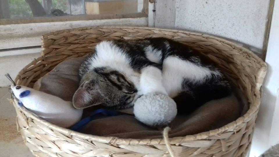Stérilisation de chats errants dans ma comune Chaton10