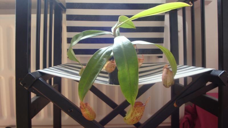 quelques photos de certaines de mes plantes ^^ 03810