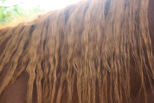 SISKO - TF né en 2007 - adopté en août 2011 par clagui Photo_15